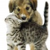 Silver Tabby kitten and Border Collie-cross puppy Dylan playing