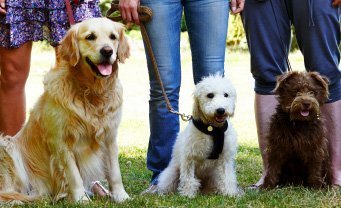 Drop-In Group Classes Out N About Dog Training